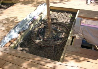 Highline Platipus rootball installed in soil