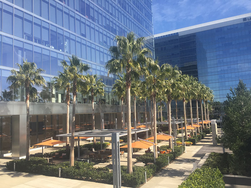 One La Jolla Center, California showing Palm trees planted using Platipus System