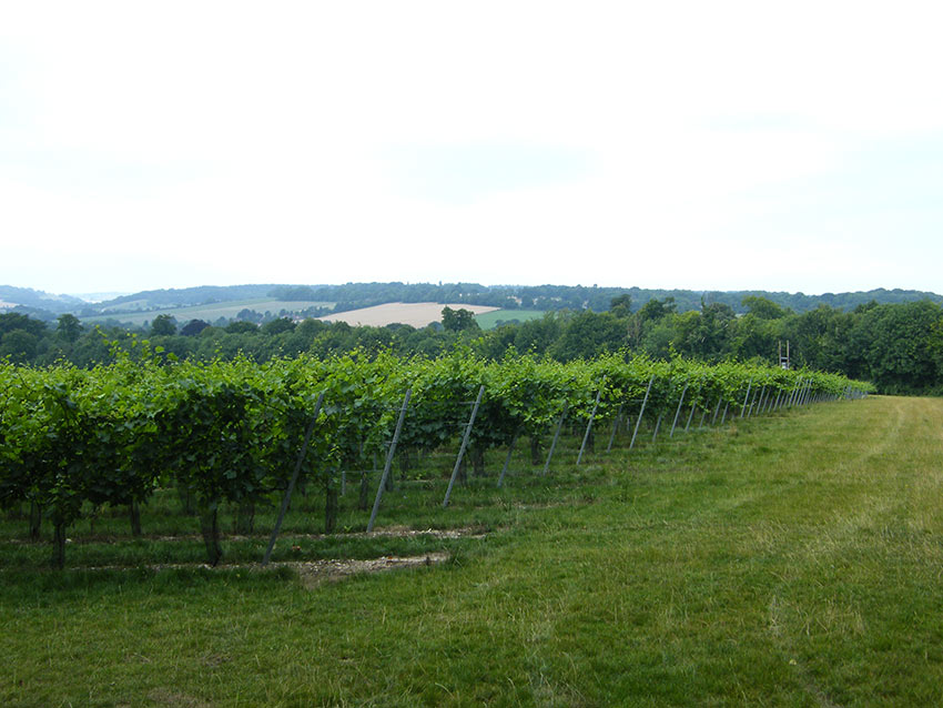 Simpsons Wine Estate – Kent, UK - Trellising installed with Platipus S4V1S anchor system