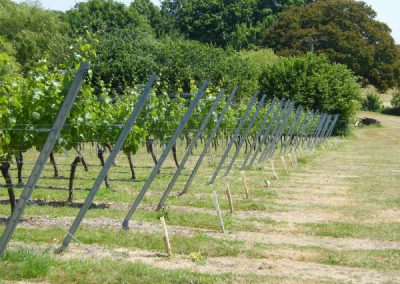 Vineyard & Soft Fruit Protection